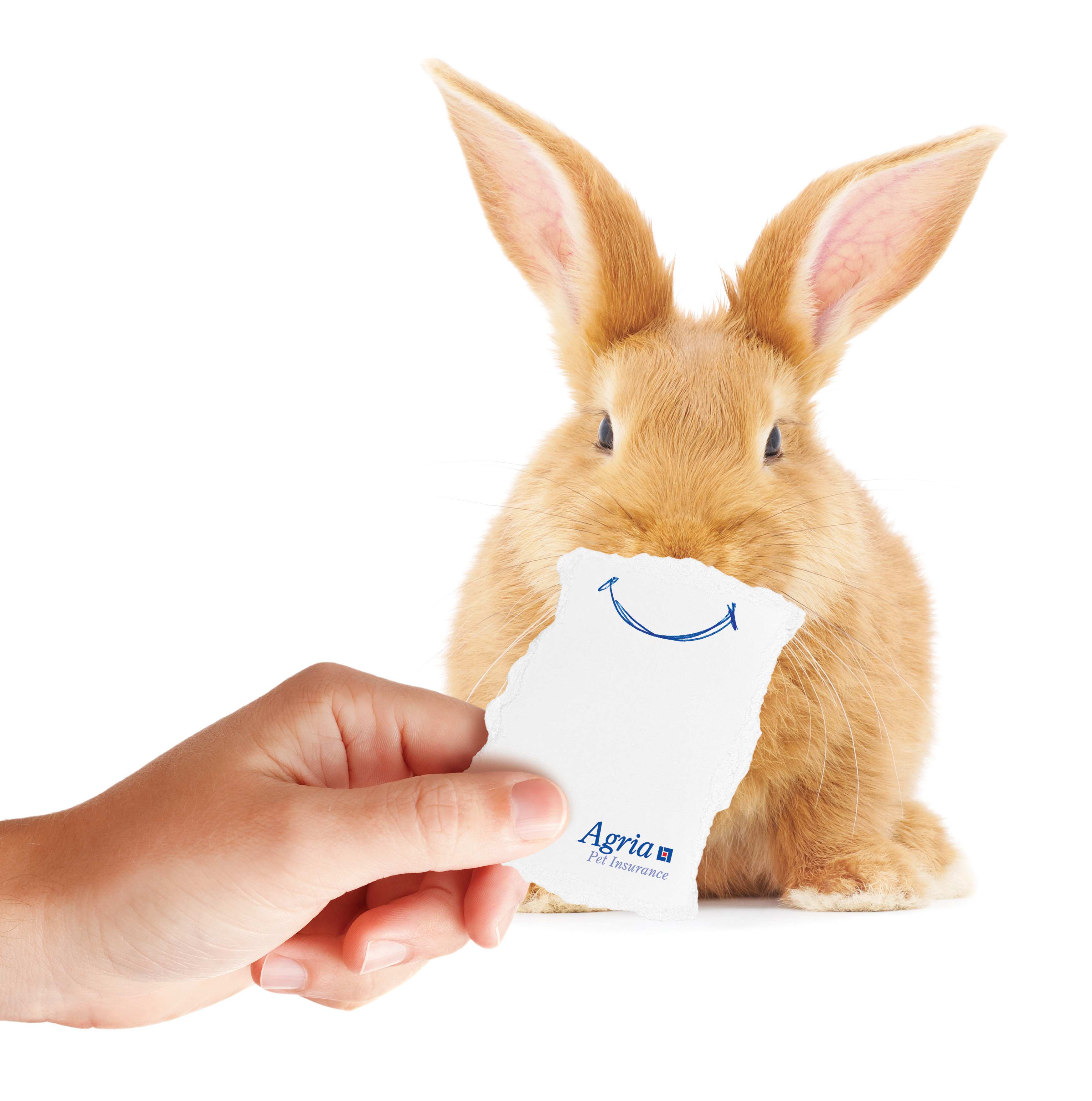 Carrot Insurance Number >> Agria talks rabbit insurance and offers £1000 CPD carrot at BSAVA congress - VetReport.net