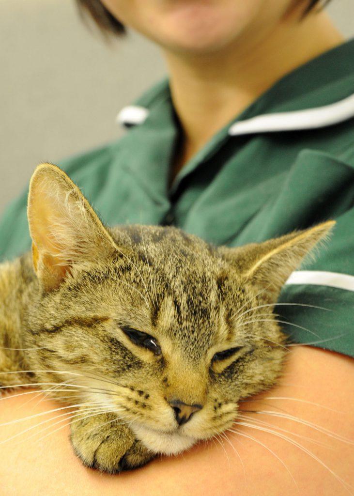 Thiamine Deficiency Cat Food