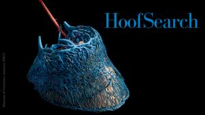 HoofSearch hoof anatomy