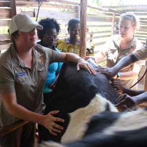 Image shows vets from XLVets on the Send a Cow initiative
