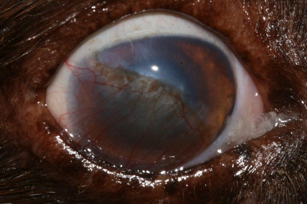 eastcott referrals ophthalmology
