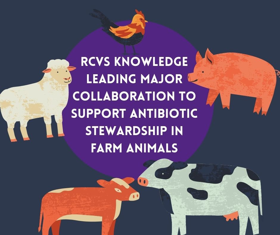 RCVS Knowledge antibiotic stewardship in farm animals